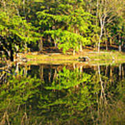Pond Reflection Guatemala Art Print