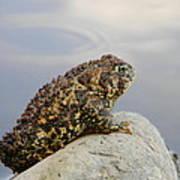 Pondering Toad Art Print