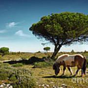 Pony Pasturing Art Print