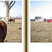 Pony Pose - Gently Cross Your Eyes And Focus On The Middle Image Art Print