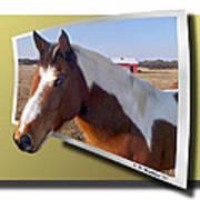 Pony Posing Art Print