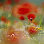 Poppies And Wildflowers In The Desert Art Print by Annie Griffiths