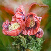 Poppies Big And Bold Art Print