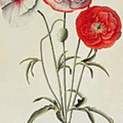 Poppies Corn Art Print