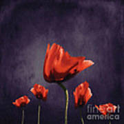 Poppies Fun 02b Art Print