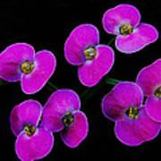 Poppin Pink Petals Art Print