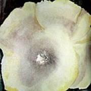 Poppy Pearl  Art Print