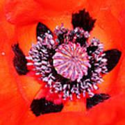 Poppy's Heart Art Print