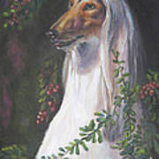 Portrait Of A Domino Afghan Hound Print by Gayle Rene
