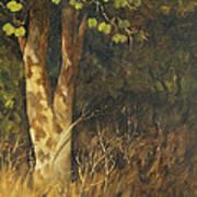 Portrait Of A Tree Trunk Art Print