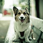 Portrait Of Dog Art Print