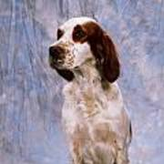 Portrait Of Irish Red And White Setter Art Print