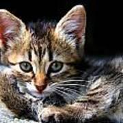 Posing Kitty Art Print