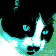 Poster Kitty Art Print