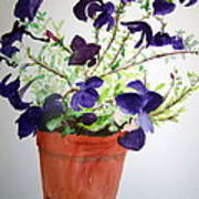 Pot Of Flowers One Art Print
