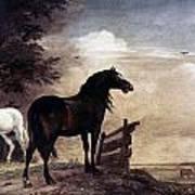 Potter: Horses, 1649 Art Print