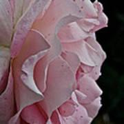 Powder Puff Pink Art Print