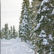 Powdery Snow Path Art Print by Lisa  Spencer