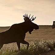 Prairie Moose Art Print