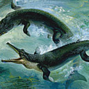 Pre-historic Crocodiles Eating A Fish Art Print