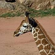 Precious Baby Giraffe Art Print by Donna Parlow