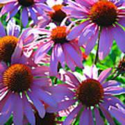 Pretty Flowers Photograph By Steve Mckinzie