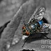 Pretty Fly For A Fly Guy Art Print