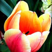 Pretty Tulip Art Print