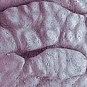 Primate Fingerprint Ridges, Sem Art Print