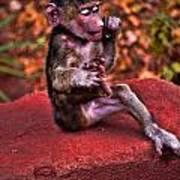 Primate Footsie Games Art Print