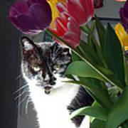 Princess The Cat And Tulips Art Print
