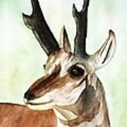 Pronghorn Magesty Art Print