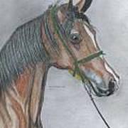 Proud Arabian  Art Print