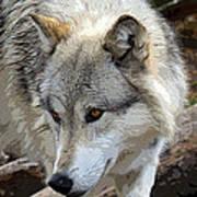 Prowling Wolf  Art Print