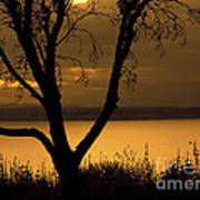 Pugent Sound Silhouetted Tree Art Print