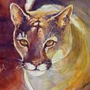 Puma Art Print