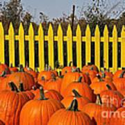 Pumpkin Corral Art Print
