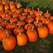 Pumpkin Piles Art Print