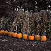 Pumpkins And Cornstalks Art Print