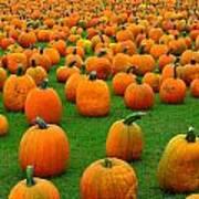 Pumpkins Forever Art Print