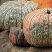 Pumpkins Galore V1 Art Print