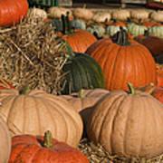 Pumpkins Pumpkins Everywhere Art Print