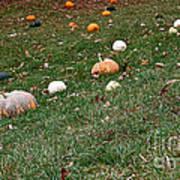 Pumpkins Art Print by Susan Herber