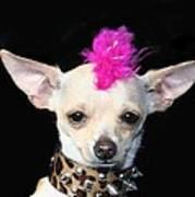 Punk Rock Chihuahua Art Print