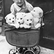 Puppies In A Pram Art Print by Fox Photos