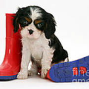 Puppies With A Childs Rain Boots Art Print