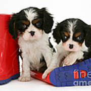 Puppies With Rain Boats Art Print