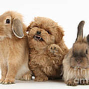 Puppy And Rabbits Art Print