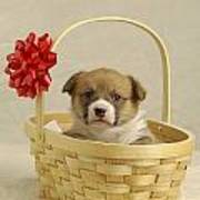 Puppy In A Basket Art Print