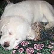 Puppy Nap Art Print